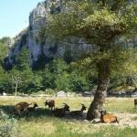 Vieil Audon, Ardèche